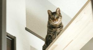 キャットウォークにいるネコ